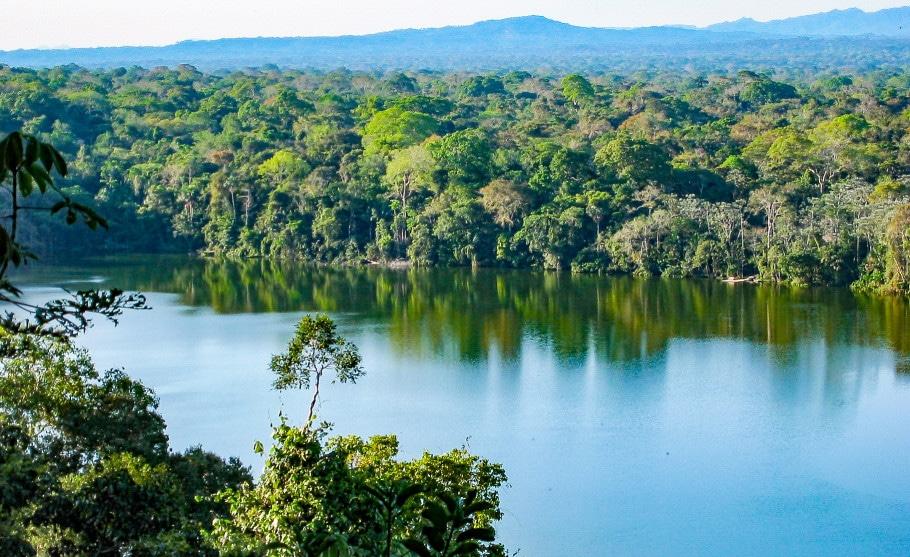 Regenwald Amazonas, Brasilien