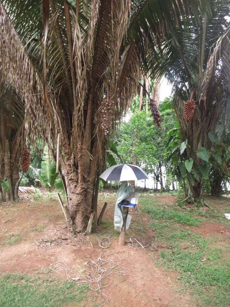 Amazonas Brasilien13