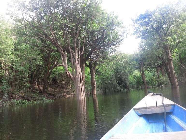 Amazonas Brasilien28