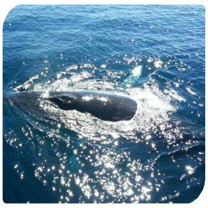 Backpacker-Australien-Whalewatching