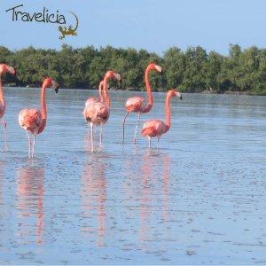 Backpacking Mexiko - Flamingos