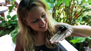 Reptilien, Bali