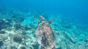 Schildkröten, Bali