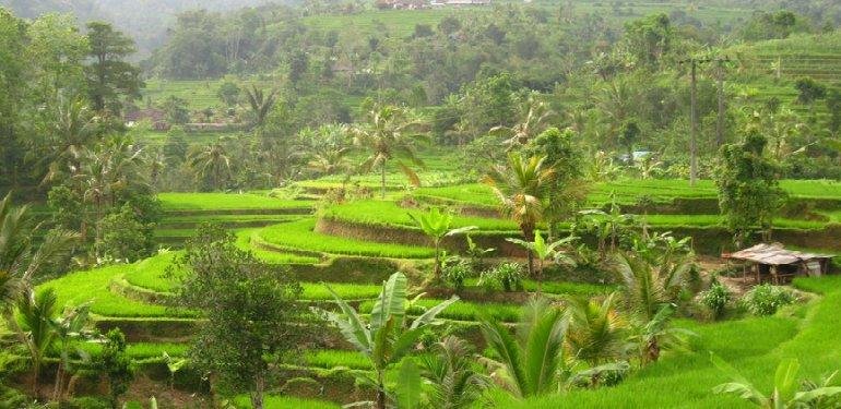 Balis Reisfelder - Pink Compass