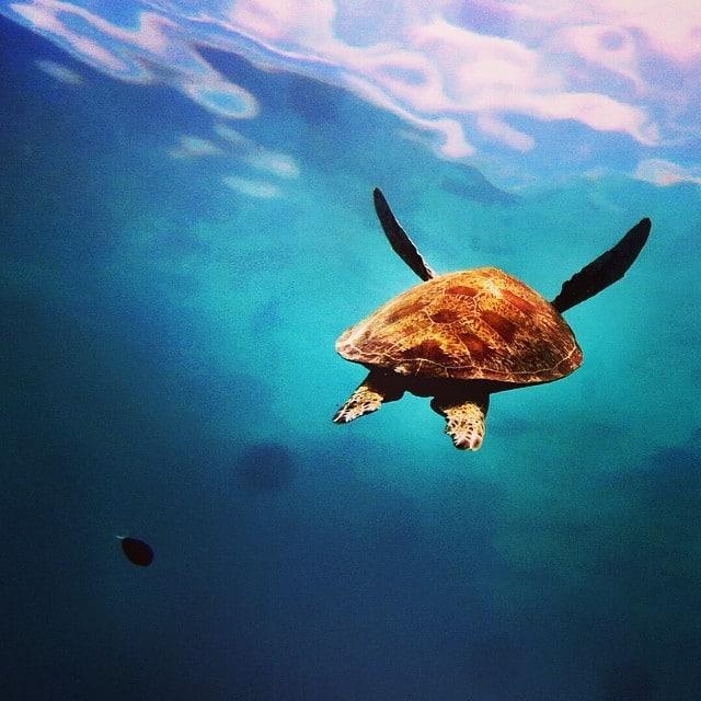 Borneo_Turtle_Island