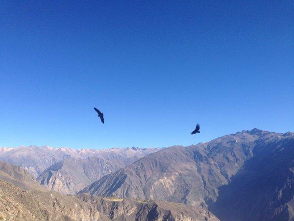 Canon del Colca Condores