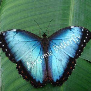 Costa Rica 2007 142