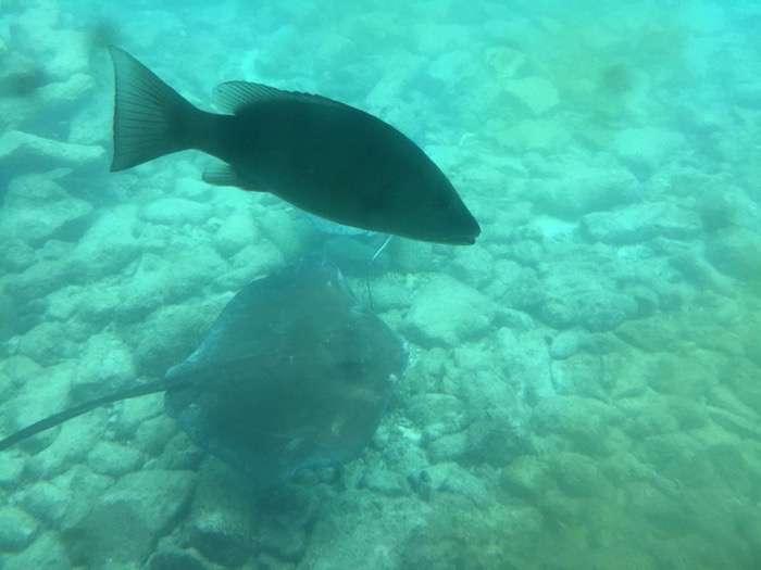 Curacao 2015 039