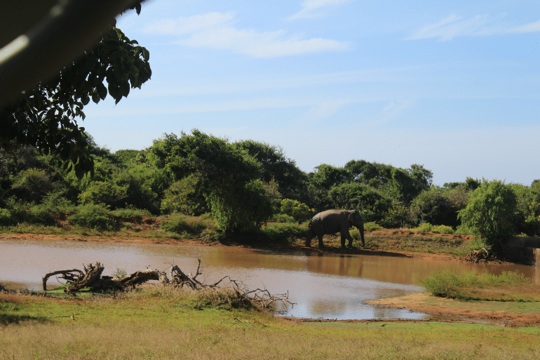 Elefant_in_Yala