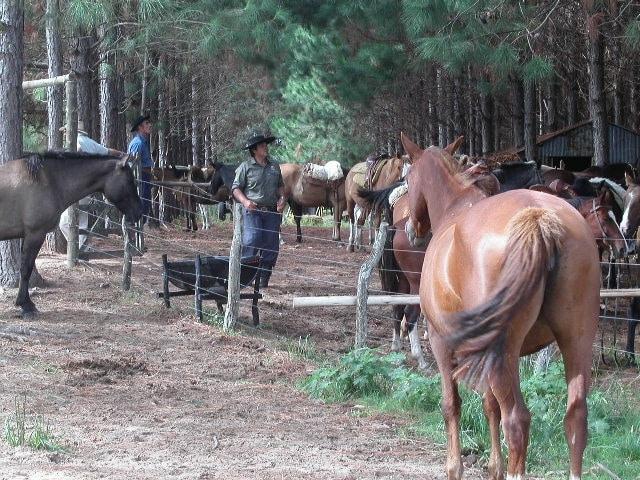 Die Pampa, eine Grassteppe im südöstlichen Teil von Südamerika ist die Heimat der Gauchos
