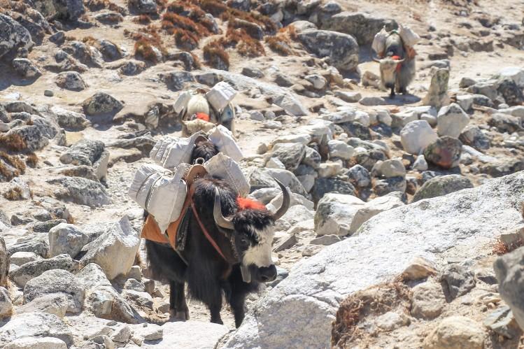 Transport_Nepal
