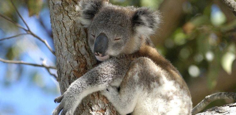 Outback-Survival: Tipps für's Campen in Australiens Wildnis!