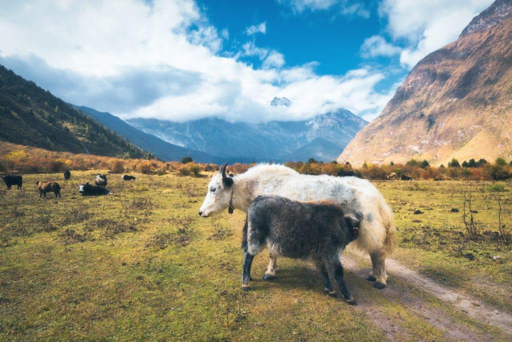 Gobi-Gurvansaikhan-Nationalpark_Mongolei