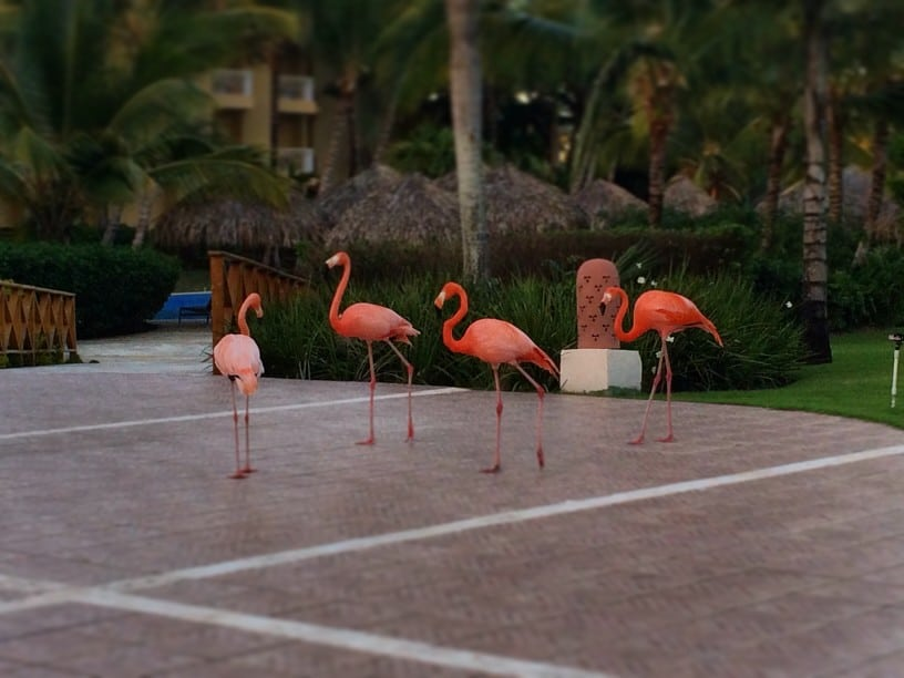 Punta Cana- Flamingo