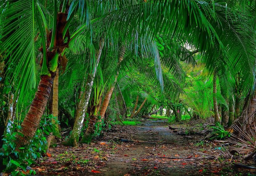 Costa Rica_Regenwald