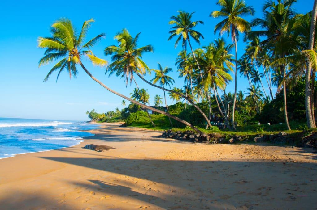 Sri_Lanka_Beste_Reisezeit