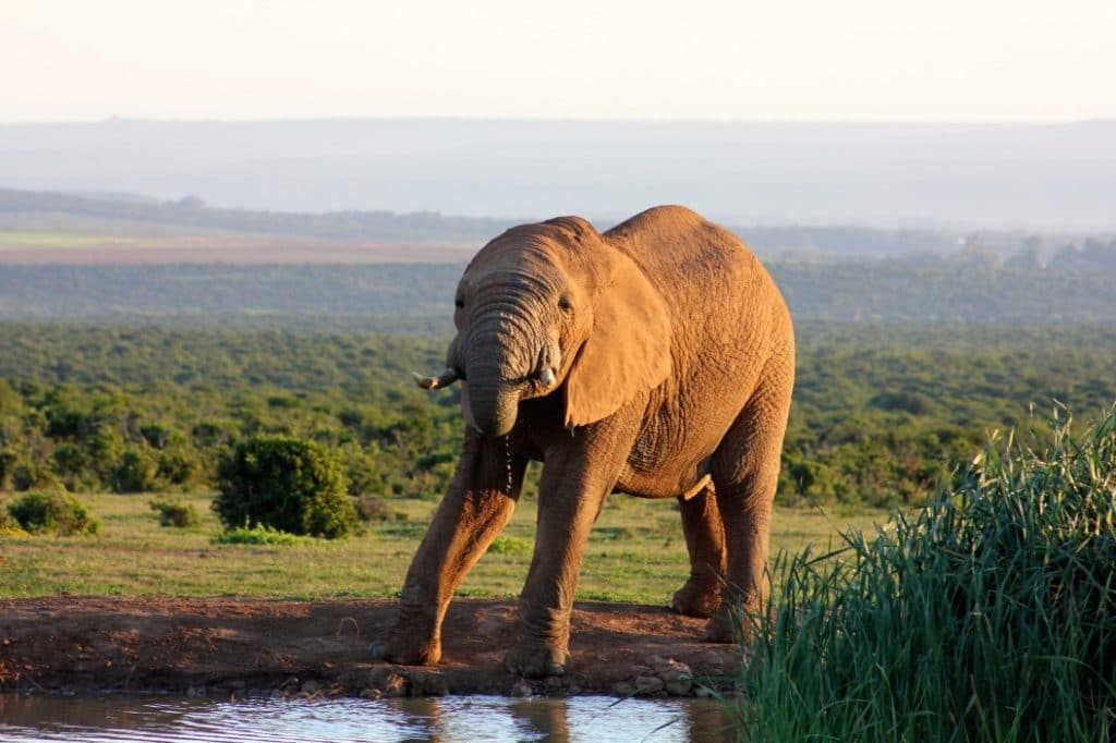 Beste Reisezeit für Backpackers in Südafrika