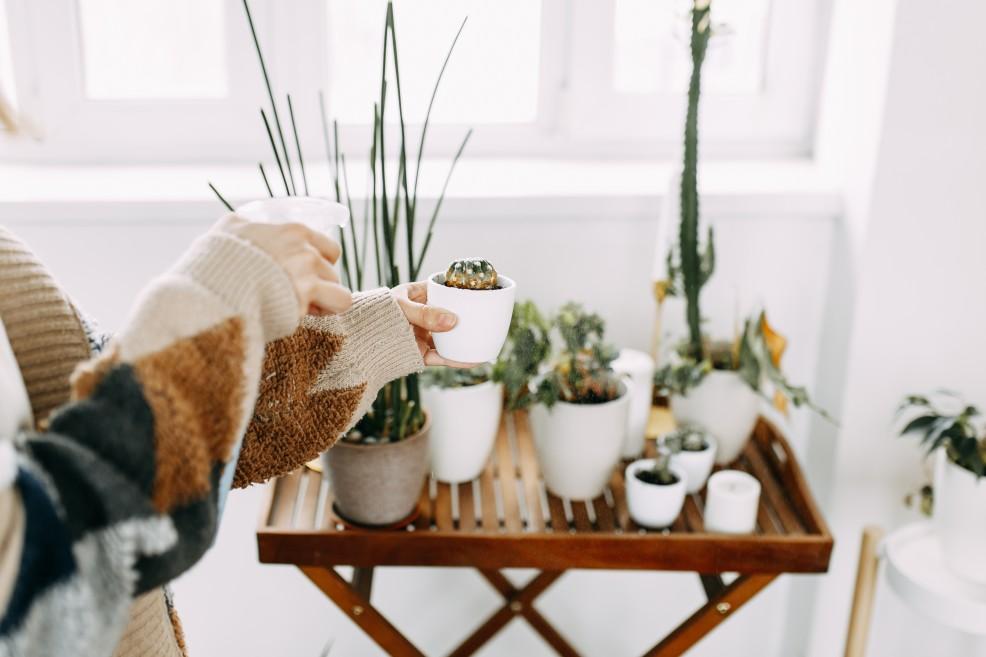 Sich um seine Pflanzen kümmern