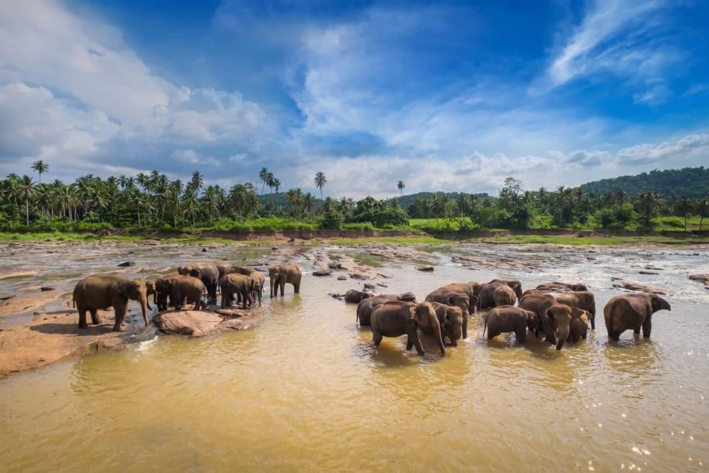 Bundala Nationalpark_Sri_Lanka