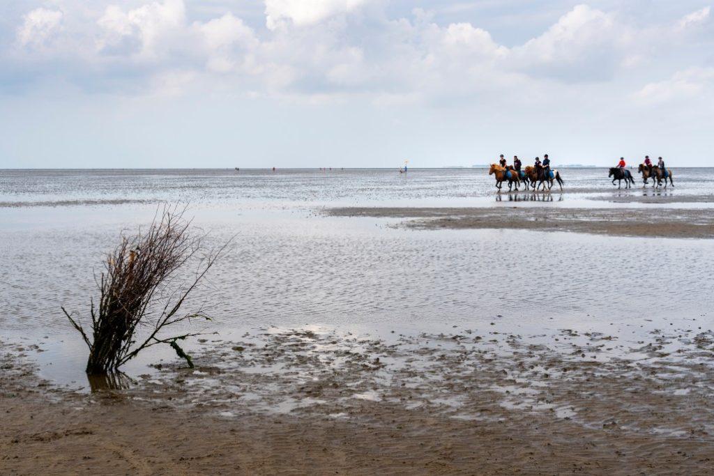 Wattenmeer, Sylt
