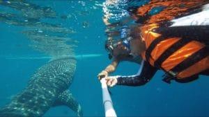 Unterwasserkameras_filmen