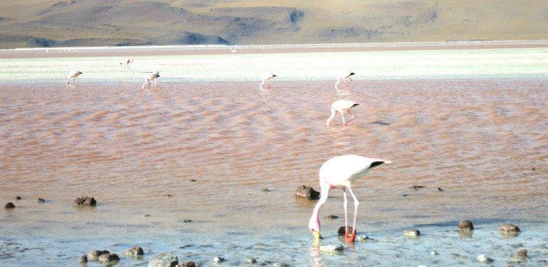 Chiles Atacamawüste: Magische Mondlandschaften, die dir den Atem rauben!