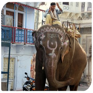 backpacking-indien-elefant