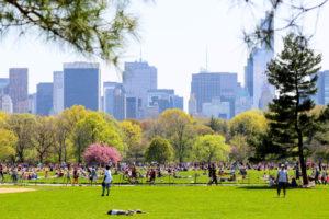 Der Central Park im Sommer