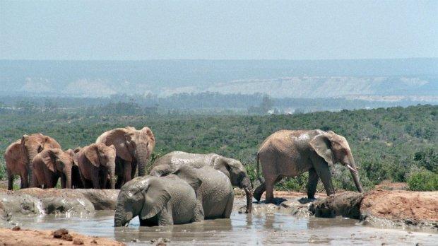Elefanten baden Südafrika