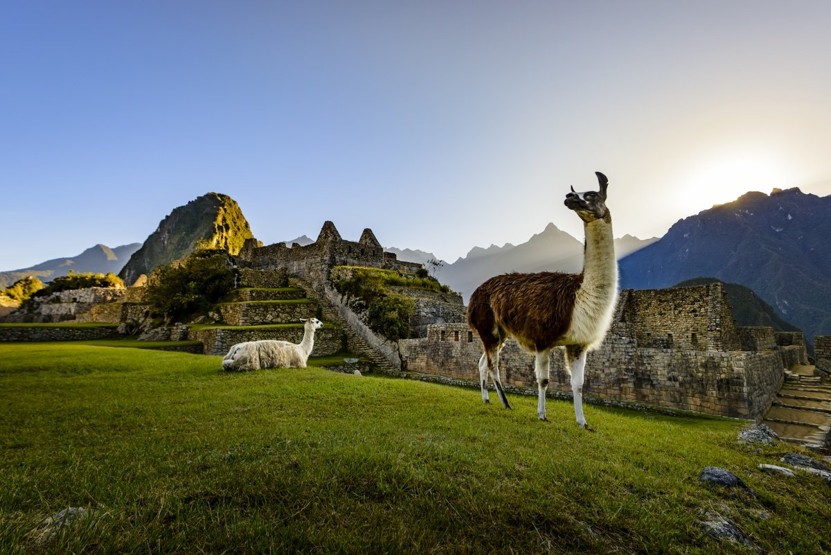 Lamas sind ein echter Hingucker in Peru