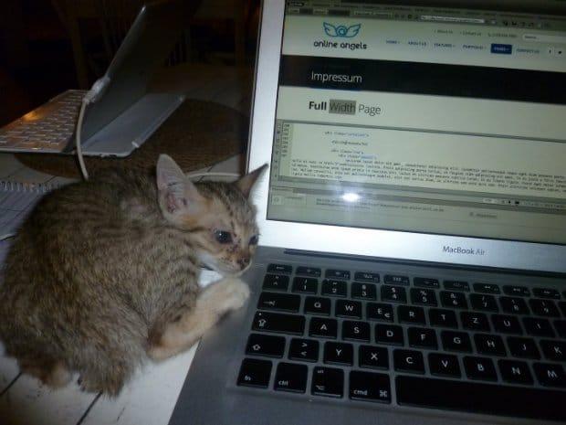 Kätzchen beim Arbeiten
