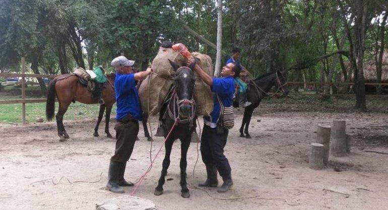 pferde-tayrona