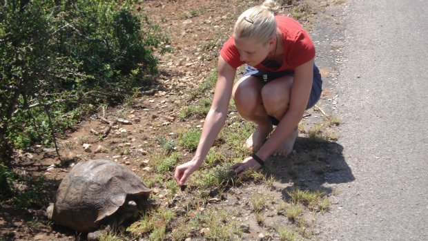 Schildkröte Südafrika