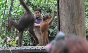 Sepilok, Borneo