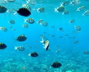 Unterwasserkamera_filmen