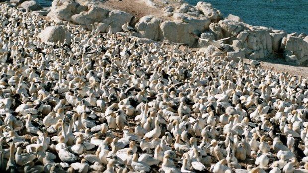 Vögel Südafrika